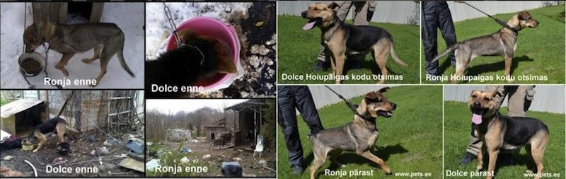 Omanikelt võõrandatud koerad otsivad kodu