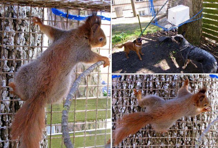 Vigastatud oravake1